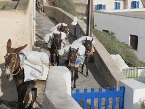 Construction donkeys